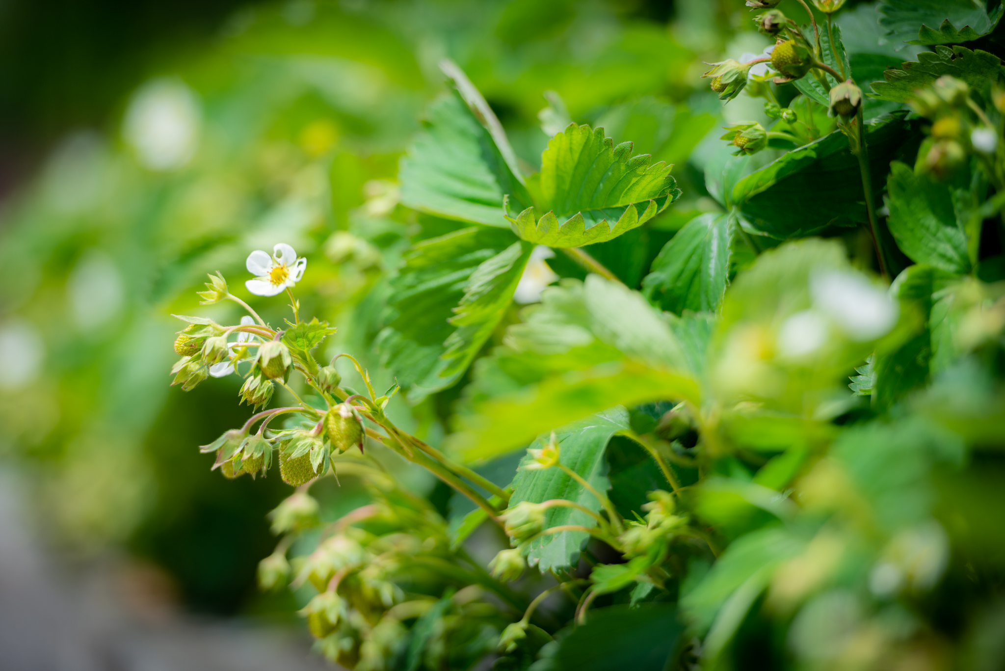 Close of young green growing leaves and