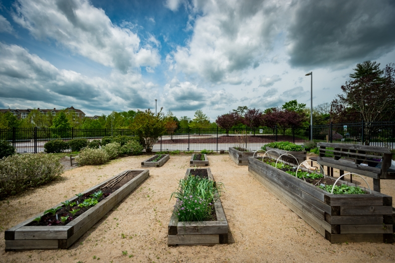 Long shot of raised beds under blue skies and white fluffy clouds.
