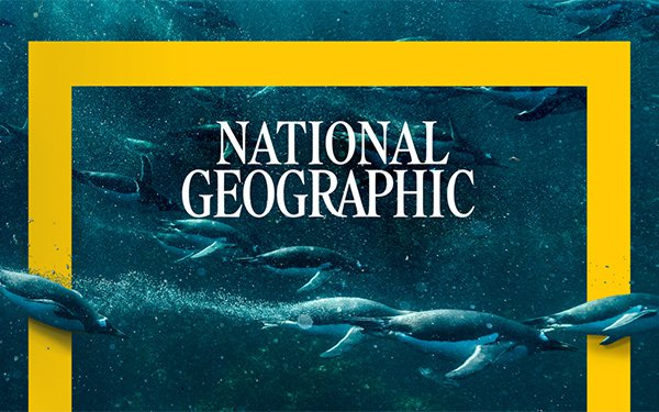 An underwater shot of a raft of penguins with the National Geographic text and yellow frame setting off the image.